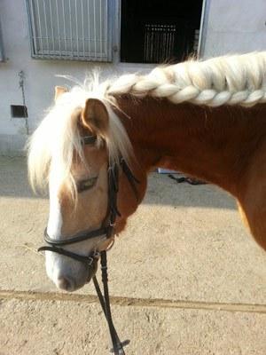 pferd-siggi